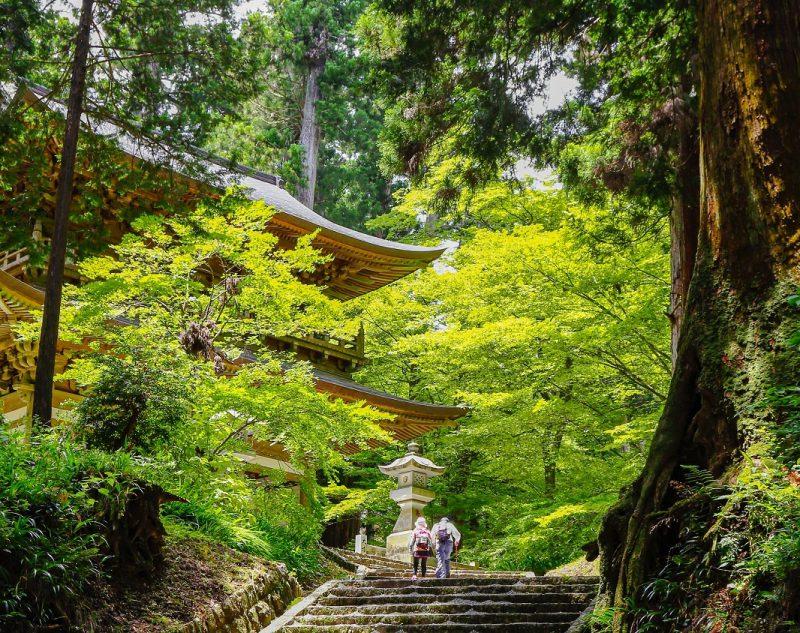 minamiashigara_03